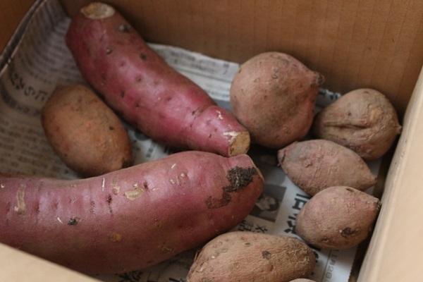 もうお腹いっぱい!焼き芋を冷凍保存する方法